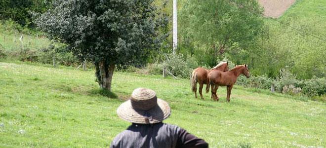 Proxecto de investigación Muller Rural